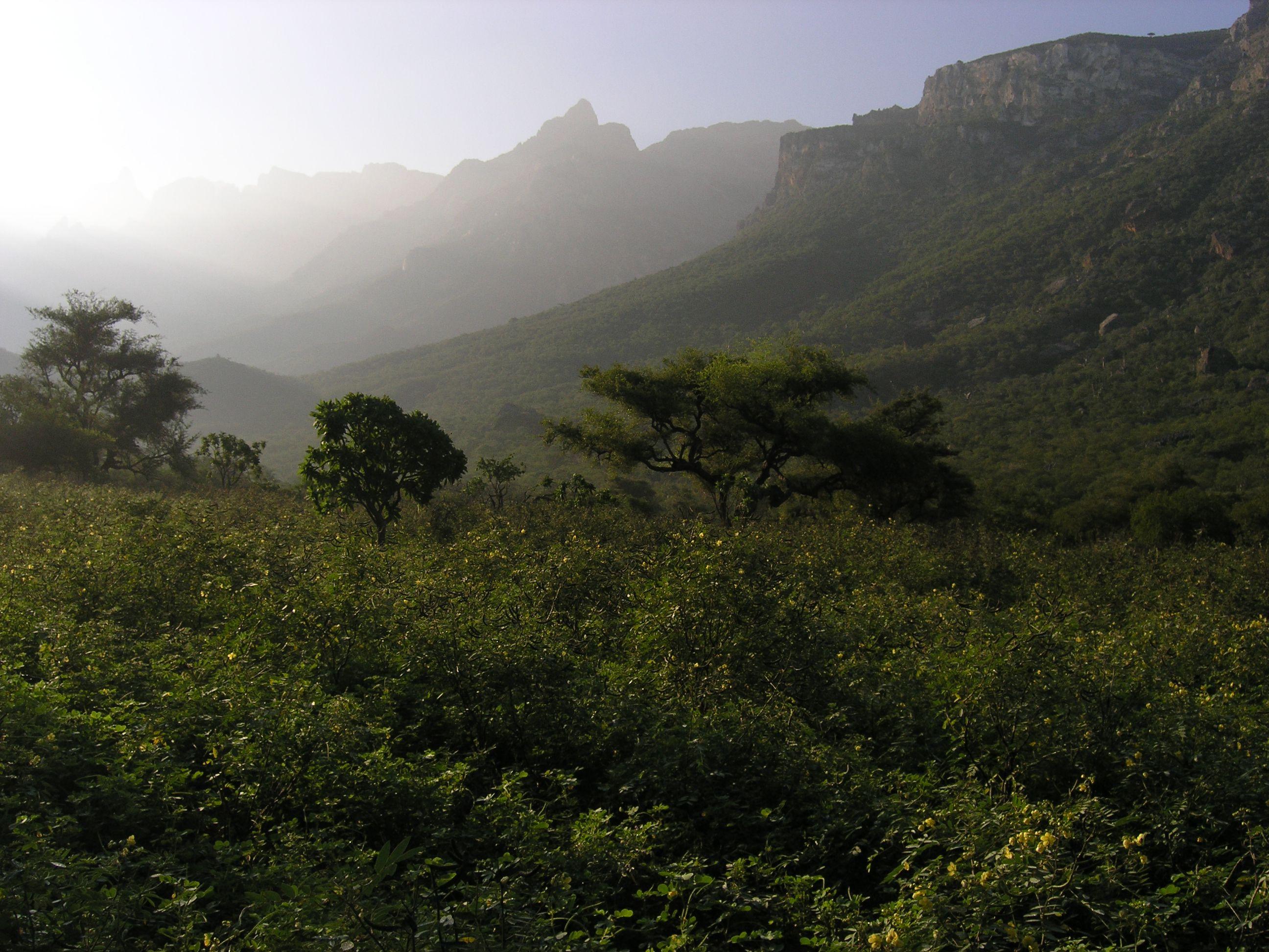 Soqotra-Berge